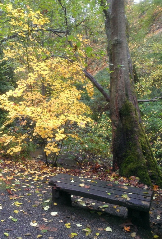 Autumn in Carkeek Park (by Dan Keusal)